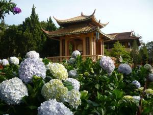 胡志明市 - 潘切美奈 - 大叻满花